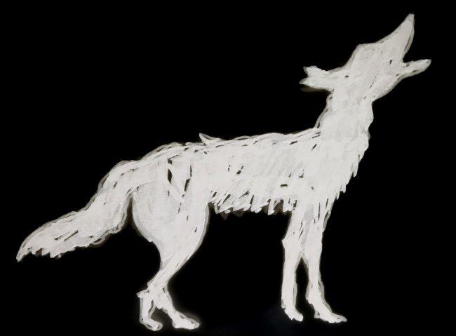 coyote- howling I